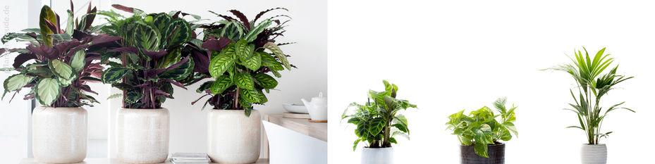blumen risse ihr blumen und pflanzenspezialist blumen risse. Black Bedroom Furniture Sets. Home Design Ideas